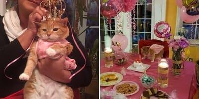 Fiesta de 15 años para una gata: las imágenes son tan extravagantes como adorables