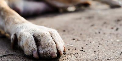 Patas de un perro callejero muerto