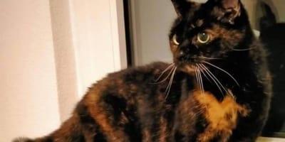 Neue Freundin hasst Tiere: Katzenoma aus Westfalen hat keine andere Wahl