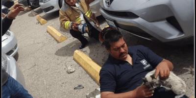 Mexicali: escuchan un llanto en la defensa de un coche y cuando revisan se les derrite el corazón