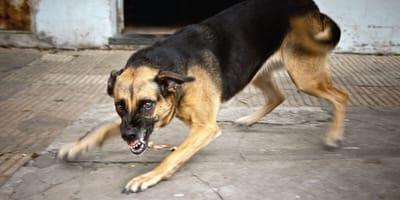 Perros peligrosos: la lista de razas peligrosas desaparecerá en mayo