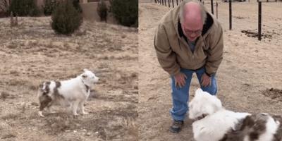 Cane cieco e sordo annusa il nonno dopo 18 mesi: lo riconoscerà? (Video)