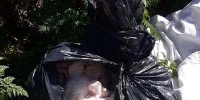 Saveso: la polizia salva 8 cani abbandonati come spazzatura