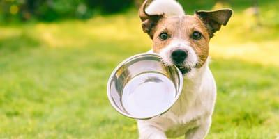 Consejos para alimentar a tu perro correctamente