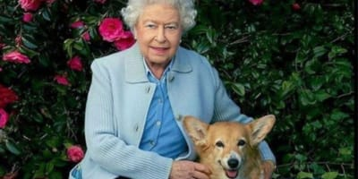 The Queen turns to her furry friends to help manage the grief of tragic loss