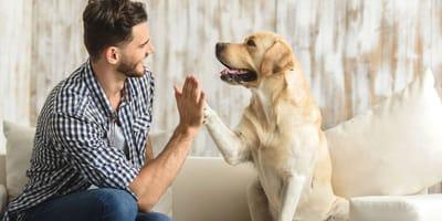 Le 10 razze di cani più obbedienti (Foto)