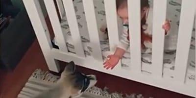 Welpe springt auf Wiege zu: Reaktion des Babys erntet tausende Klicks! (Video)
