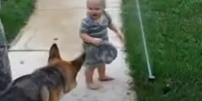 Parents' eyes widen as giant dog runs toward baby playing in garden