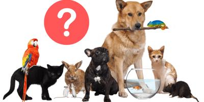 Haustiere wie Hund, Katze, Fisch, Hamster und mehr