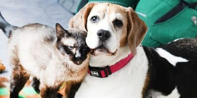 Tierheim Berlin vermittelt Hund und Katze: Ein Detail lässt alle verstummen
