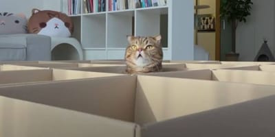 Cat's head sticking out the top of box