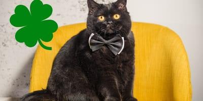 Martes 13: estos trece gatos negros te van a dar toda la vibra positiva que necesitas