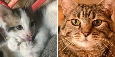 5 gatos que no son capaces de encontrar una familia