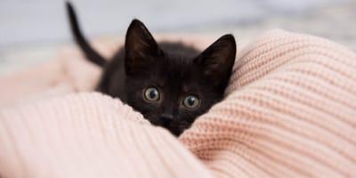 Los nombres para gatas negras más inspiradores y hermosos
