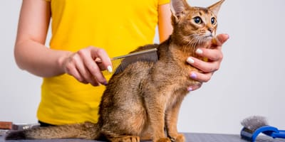 Cat groomer: What can you expect when taking your cat to a groomer