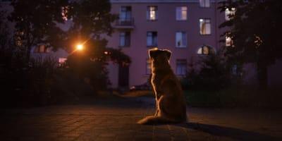Se escucha una balacera en la calle y no vuelve a ver a su perro