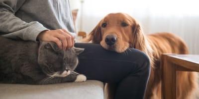 I cani possono essere gelosi? La risposta della scienza