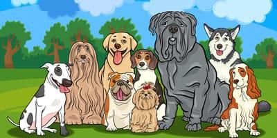 Diferentes perros de raza medianos