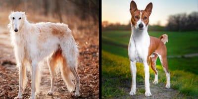 12 razze di cani tranquilli e docili da scoprire in foto