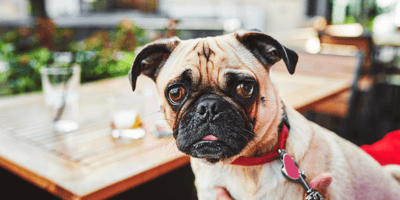 5 of the best dog-friendly pubs in Birmingham