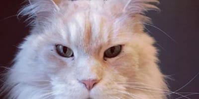 10 foto che provano che sono i gatti i padroni di casa