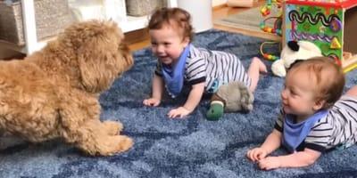 Labradoodle und Babys bringen 30 Millionen zum SCHMELZEN!