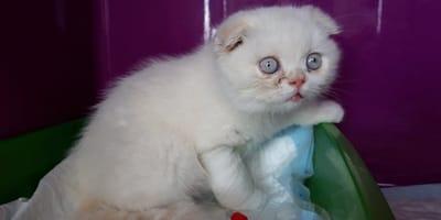 Ausgesetzt: Doch was sie mit diesem Kätzchen gemacht haben, geht noch viel weiter