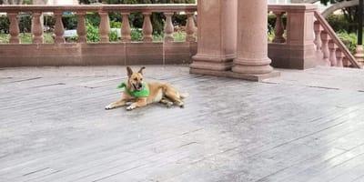 Se retira Canelo, el perrito más aventurero de SLP