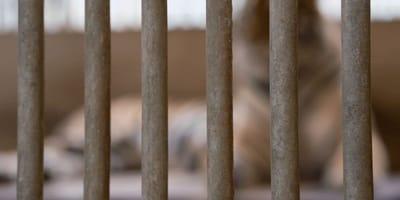 Käfig im Zoo