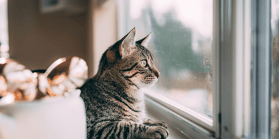 Leaving my cat alone after lockdown: How can I prepare?