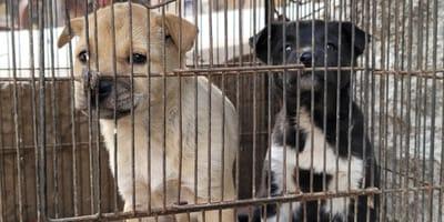 pagina web compra venta animales milanuncios