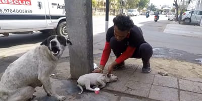 Hundemutter mit offenem Maul neben krankem Hundekind