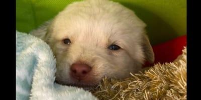 Agrigento: cucciola gettata da un'auto si salva per miracolo (Video)