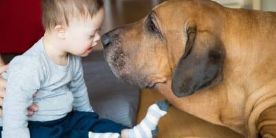 ¿Cómo adiestrar un perro de intervención?
