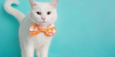 Cómo hacer un collar para gato fácil y sin gastar mucho dinero