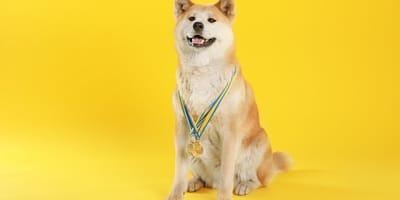 ¿Tu perro es el más simpático de México? ¡Puede ganar 1 año de comida gratis!