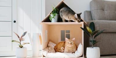 <p>Algunos tutores crean casas incre&iacute;bles para sus gatos.</p>