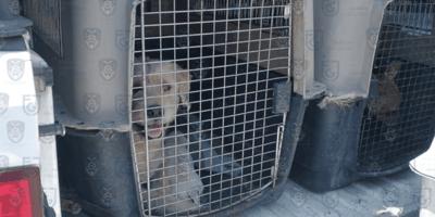 La policía catea una casa en la CDMX y se encuentra a 7 perritos viviendo una pesadilla