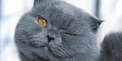 Mi gato me guiña un ojo: ¿por qué lo hace?