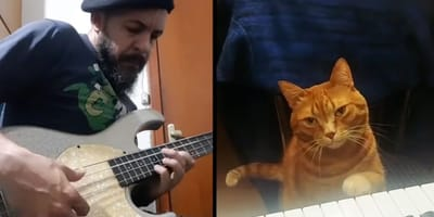 Guitarist stunned when he discovers ginger tabby's incredible talent