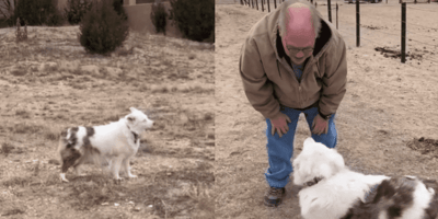 perro sordo y ciego tiktok