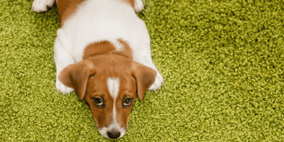 Shocking survey reveals some people think dogs are a health risk