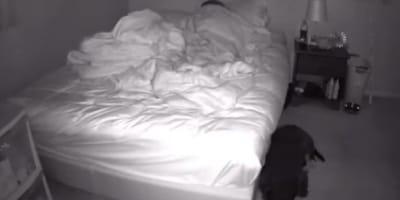 Źle sypia, więc instaluje kamerę w sypialni. Kiedy rano ogląda film, wzruszenie ściska jej krtań