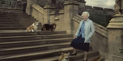 regina-elisabetta-d-inghilterra-con-i-cani-corgi