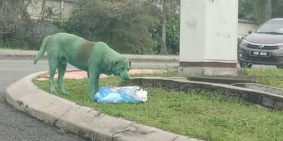 perro verde abandonado en la carretera
