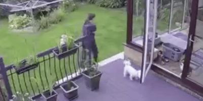 I cani non ascoltano la padrona: ad aiutarla arriva il boss di casa (Video)
