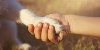 Una persona estrecha su mano con un perro