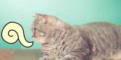 ¿Cómo se dice gato en diferentes lenguas indígenas de México?