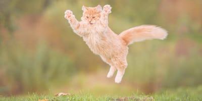¿Por qué los gatos caen de pie siempre? La explicación científica de este fenómeno