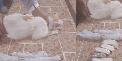gato narcomenudeo